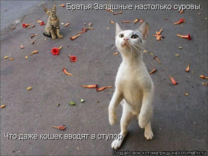 Котоматрица: Братья Запашные настолько суровы, Что даже кошек вводят в ступор
