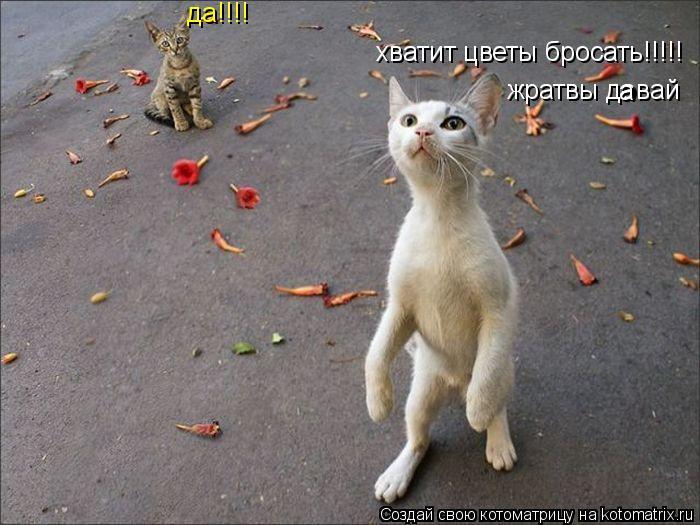 Котоматрица: хватит цветы бросать!!!!! да!!!! жратвы довай а а