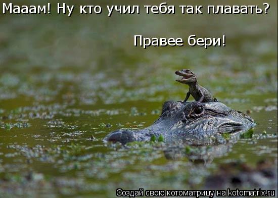 Котоматрица: Мааам! Ну кто учил тебя так плавать? Правее бери!