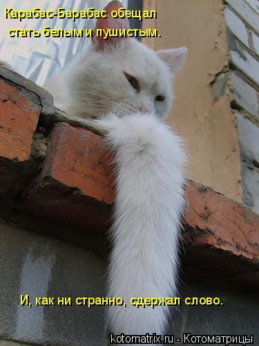 Котоматрица: стать белым и пушистым.  И, как ни странно, сдержал слово. Карабас-Барабас обещал