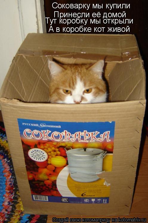 Котоматрица: Соковарку мы купили Принесли её домой А в коробке кот живой Тут коробку мы открыли