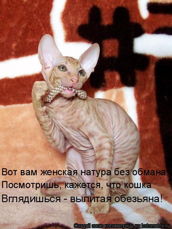 Котоматрица: Вот вам женская натура без обмана: Посмотришь, кажется, что кошка Вглядишься - вылитая обезьяна!