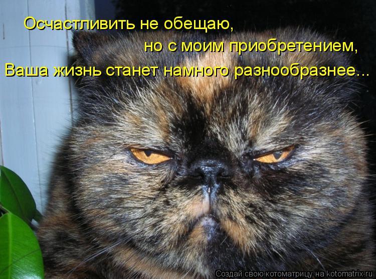 Котоматрица: Осчастливить не обещаю, но с моим приобретением, Ваша жизнь станет намного разнообразнее...