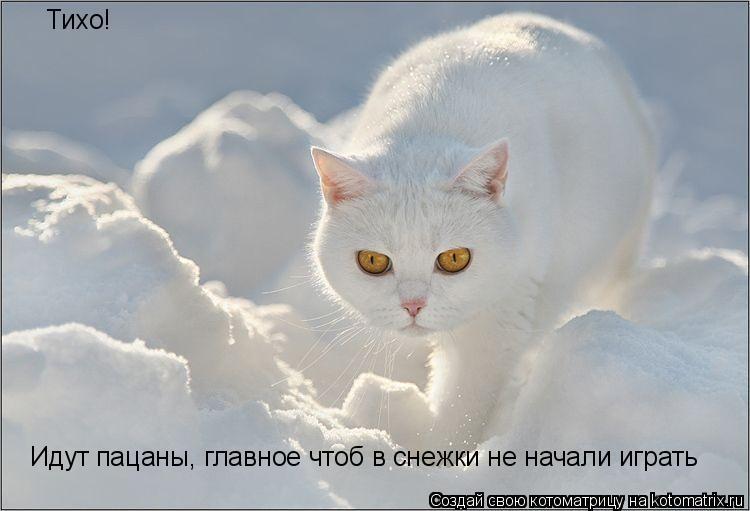 Котоматрица: Тихо! Идут пацаны, главное чтоб в снежки не начали играть