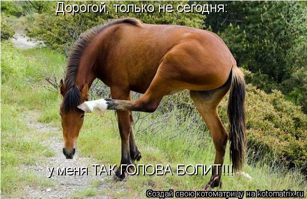 Котоматрица: Дорогой, только не сегодня: у меня ТАК ГОЛОВА БОЛИТ!!!