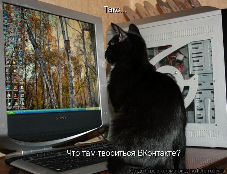 Котоматрица: Такс... Что там твориться ВКонтакте?