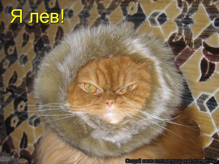 Котоматрица: Я лев!
