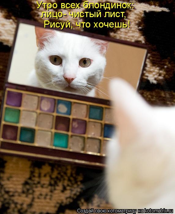 Котоматрица - Утро всех блондинок: лицо- чистый лист, Рисуй, что хочешь!