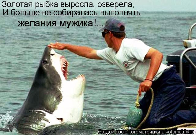 Котоматрица: Золотая рыбка выросла, озверела, И больше не собиралась выполнять  желания мужика!...
