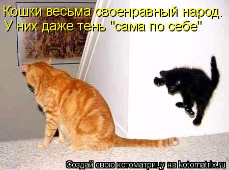 """Котоматрица: У них даже тень """"сама по себе"""" Кошки весьма своенравный народ."""