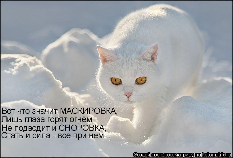 Котоматрица: Вот что значит МАСКИРОВКА, Лишь глаза горят огнём. Не подводит и СНОРОВКА, Стать и сила - всё при нём!..