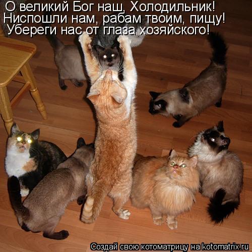 Котоматрица: О великий Бог наш, Холодильник! Ниспошли нам, рабам твоим, пищу! Убереги нас от глаза хозяйского!