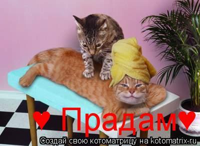 Котоматрица: ♥ Прадам♥