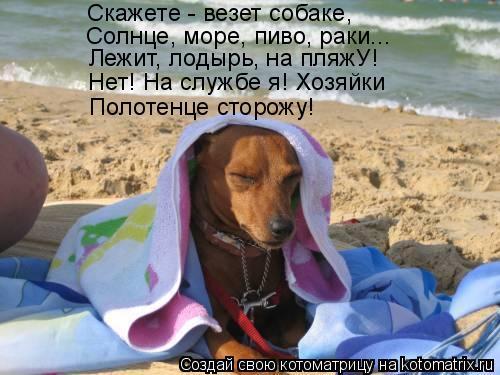 Котоматрица: Скажете - везет собаке, Солнце, море, пиво, раки... Лежит, лодырь, на пляжУ! Нет! На службе я! Хозяйки Полотенце сторожу!