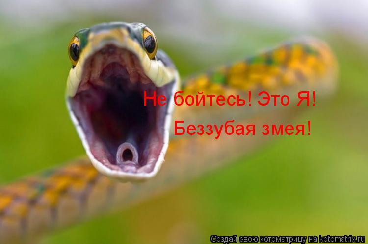 Котоматрица: Не бойтесь! Это Я! Беззубая змея!