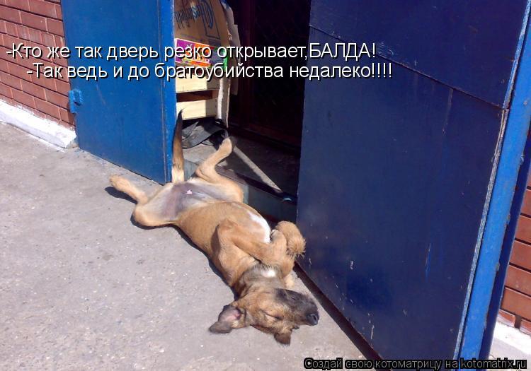 Котоматрица: -Кто же так дверь резко открывает,БАЛДА! -Так ведь и до братоубийства недалеко!!!!