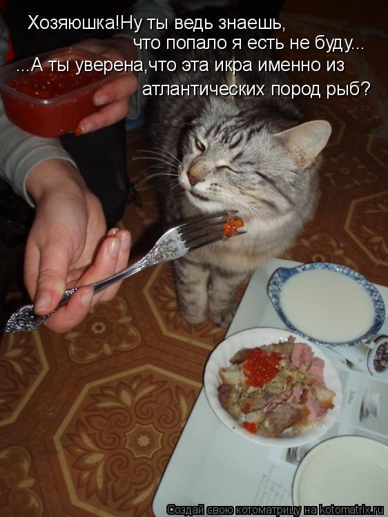 Котоматрица: Хозяюшка!Ну ты ведь знаешь, что попало я есть не буду... ...А ты уверена,что эта икра именно из атлантических пород рыб?