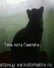 Котоматрица: Тень кота Гамлета