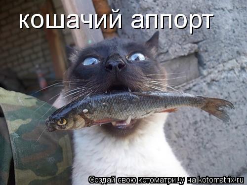 Котоматрица: кошачий аппорт
