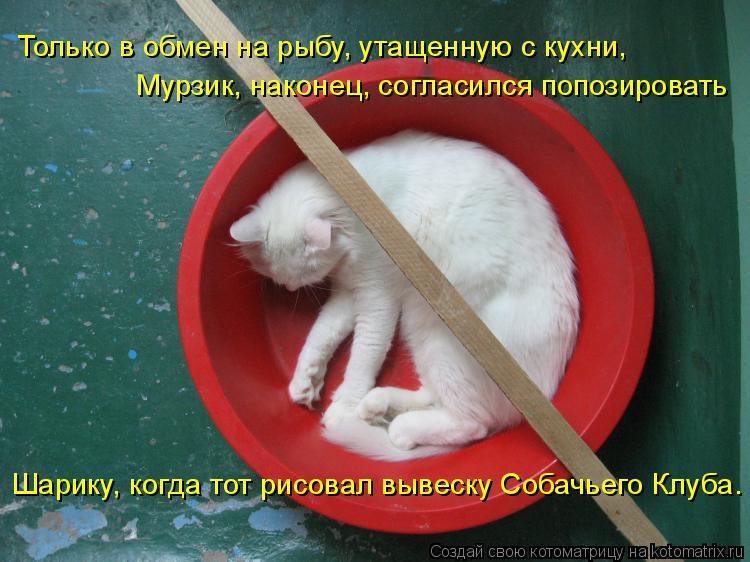 Котоматрица: Мурзик, наконец, согласился попозировать  Шарику, когда тот рисовал вывеску Собачьего Клуба. Только в обмен на рыбу, утащенную с кухни,