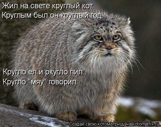 """Котоматрица: Жил на свете круглый кот.  Круглым был он круглый год. Кругло ел и ркугло пил. Кругло """"мяу"""" говорил."""
