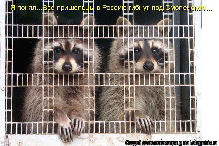 Котоматрица: Я понял...Все пришельцы в Россию гибнут под Смоленском...