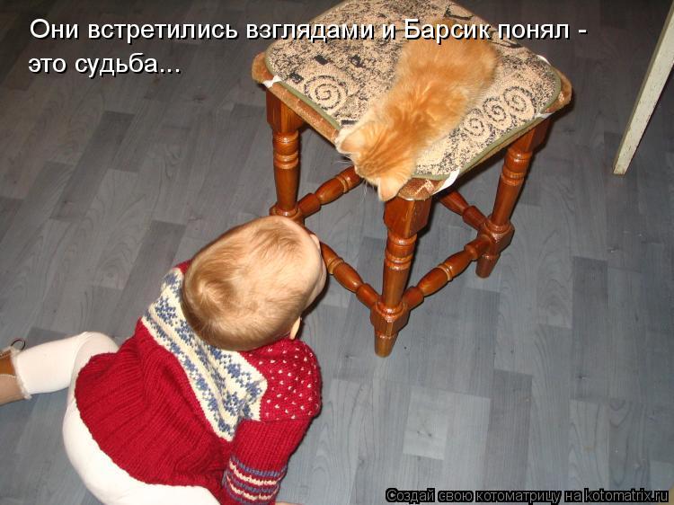 Котоматрица: Они встретились взглядами и Барсик понял -  это судьба...