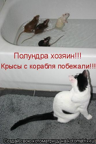 Котоматрица: Полундра хозяин!!! Крысы с корабля побежали!!!