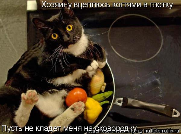 Котоматрица: Хозяину вцеплюсь когтями в глотку Пусть не кладет меня на сковородку
