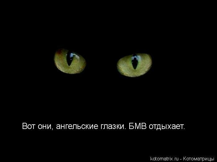 Котоматрица: Вот они, ангельские глазки. БМВ отдыхает.