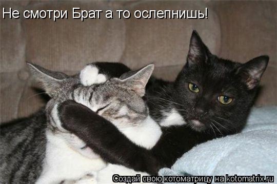 Котоматрица: Не смотри Брат а то ослепнишь!