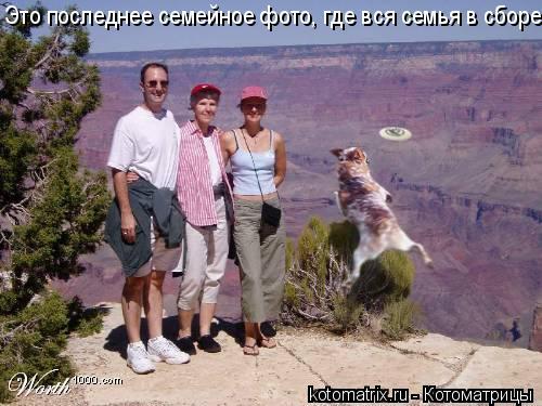 Котоматрица: Это последнее семейное фото, где вся семья в сборе.