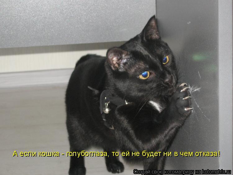 Котоматрица: А если кошка - голубоглаза, то ей не будет ни в чем отказа!