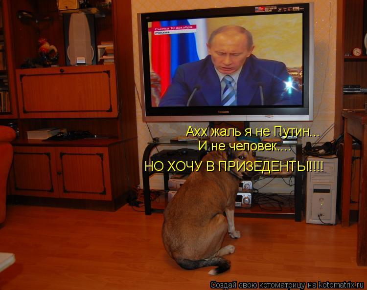 Котоматрица: Ахх жаль я не Путин... И не человек.... НО ХОЧУ В ПРИЗЕДЕНТЫ!!!!