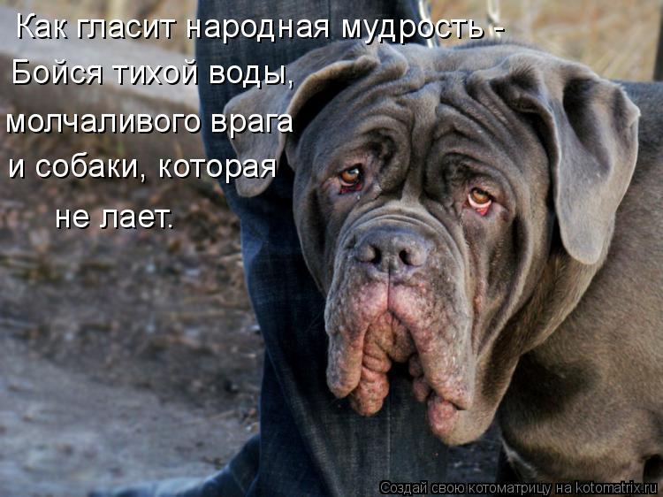 Котоматрица: Как гласит народная мудрость - Бойся тихой воды, и собаки, которая  не лает. молчаливого врага