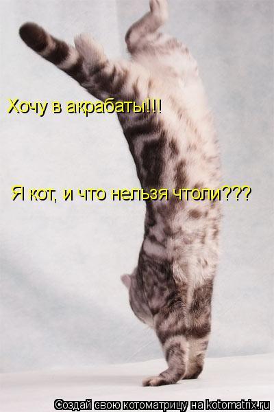 Котоматрица: Хочу в акрабаты!!! Я кот, и что нельзя чтоли???