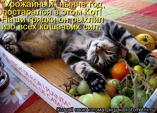 """Котоматрица: """"Урожайный"""" нынче год, постарался в этом Кот! Наши грядки он рыхлил изо всех кошачьих сил."""