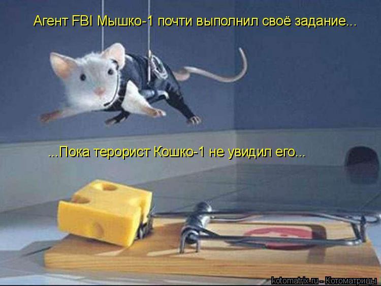 Котоматрица: Агент FBI Мышко-1 почти выполнил своё задание... ...Пока терорист Кошко-1 не увидил его...