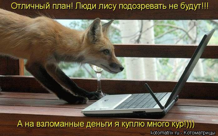 Котоматрица: Отличный план! Люди лису подозревать не будут!!! А на взломанные деньги я куплю много кур!)))