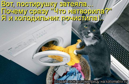 """Котоматрица: Вот, постирушку затеяла... Почему сразу """"Что натворила?"""" Я и холодильник почистила!.."""
