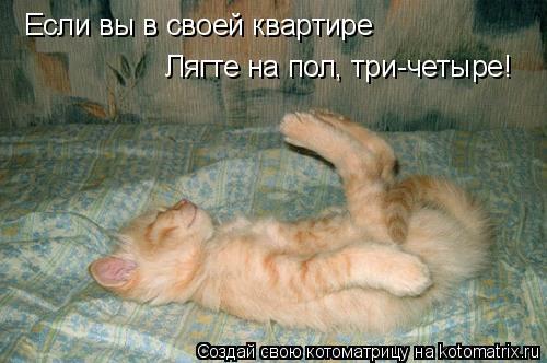 Котоматрица: Если вы в своей квартире Лягте на пол, три-четыре!