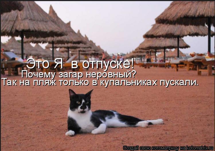 Котоматрица: Это Я  в отпуске! Почему загар неровный? Так на пляж только в купальниках пускали.