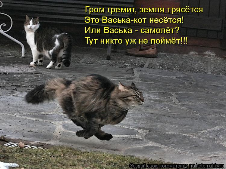 Котоматрица: Гром гремит, земля трясётся Это Васька-кот несётся! Или Васька - самолёт? Тут никто уж не поймёт!!!