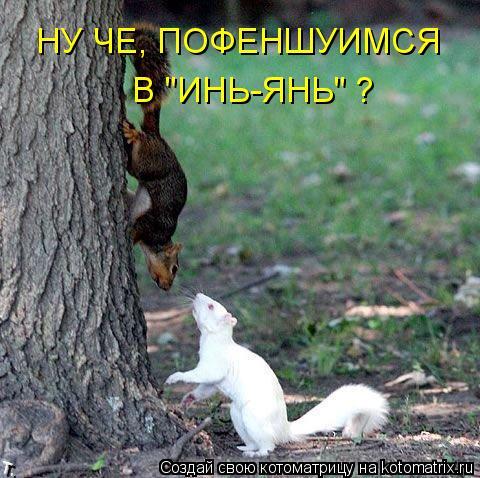 """Котоматрица: НУ ЧЕ, ПОФЕНШУИМСЯ  В """"ИНЬ-ЯНЬ"""" ?"""