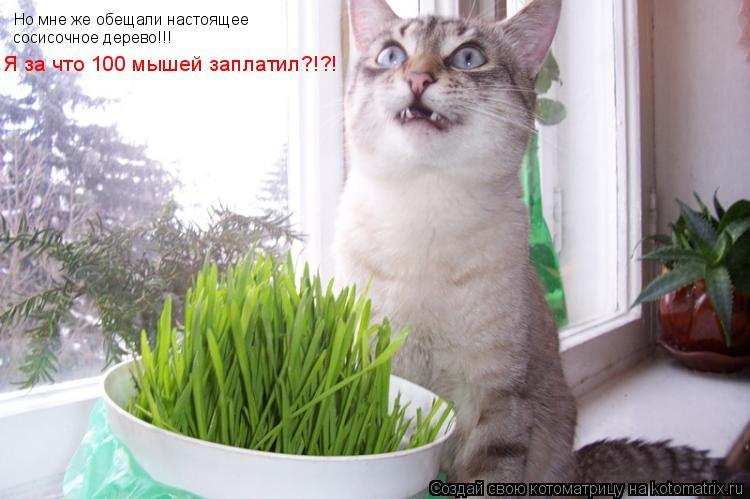 Котоматрица: Но мне же обещали настоящее  сосисочное дерево!!! Я за что 100 мышей заплатил?!?!
