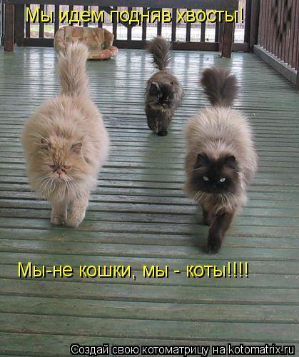 Котоматрица: Мы идем подняв хвосты! Мы-не кошки, мы - коты!!!!