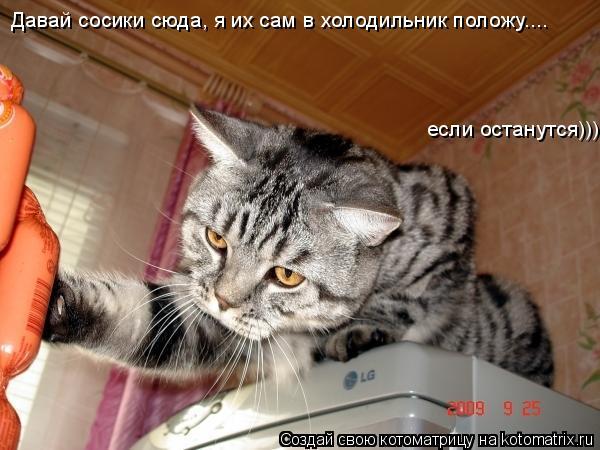 Котоматрица: Давай сосики сюда, я их сам в холодильник положу.... если останутся)))