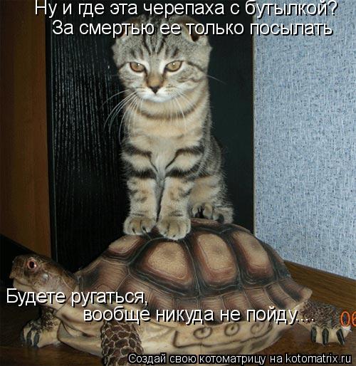 Котоматрица: Ну и где эта черепаха с бутылкой? За смертью ее только посылать Будете ругаться, вообще никуда не пойду....