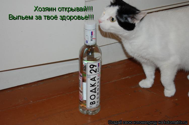 Котоматрица: Хозяин открывай!!! Выпьем за твоё здоровье!!!