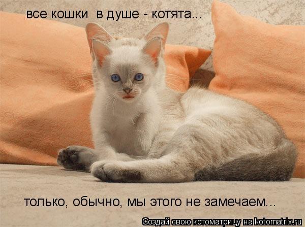 Котоматрица: только, обычно, мы этого не замечаем... все кошки  в душе - котята...